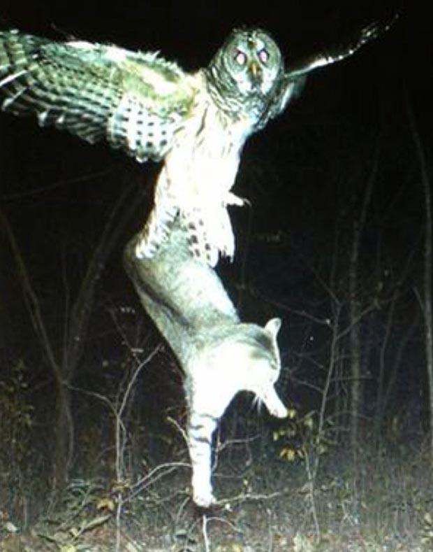 Do Snowy Owls Eat Dogs
